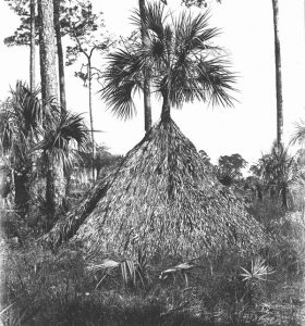Photo of a Seminole Wigwam of palm leaves built around a Sabal Palmetto